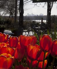 The view of Dallas from the Dallas Arboretum during Dallas Blooms 2014.