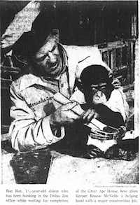 Bon Bon in the arms of a keeper in 1960 It was a whole different world back in the 50s and 60s in the zoo field, mammal curator Keith Zdrojewski said. (Dallas Morning News)