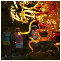 Chihuly's The Sun is seen as the sun sets at the Dallas Arboretum. Photographed with a Canon 5D Mark III.Tom Fox