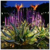from front to back, Mirrored Hornets, Neodymium Reeds, and Scarlet and Yellow Asymmetrical Towers are illuminated during Chihuly Nights at the Dallas Arboretum. Photographed with a Canon 5D Mark III.Tom Fox