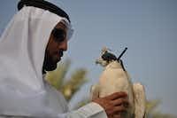 Hassan Al Sarhan at the Abu Dhabi Falcon Hospital shows off a peregrine falcon.