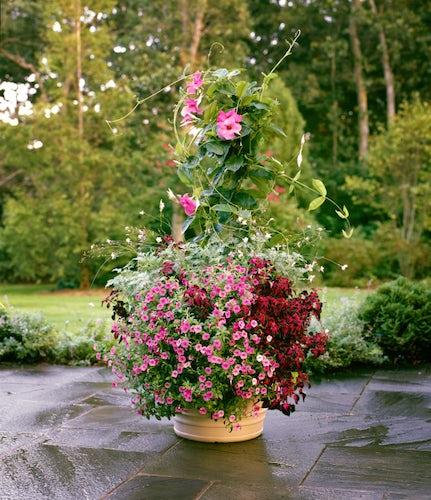 See p allen smith 39 s thriller filler and spiller container gardens dallas news life - P allen smith container gardens ...