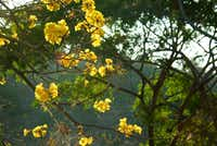 The bright yellow flowers of the Cortez amarillo tree punctuate the landscape, adding color to the gold season.