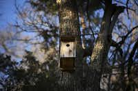 A bird feeder built by local Eagle Scouts hangs from a tree at the Dogwood Canyon Audubon Center at Cedar Hill.