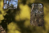 Trees can be seen through bird-viewing blinds at the Dogwood Canyon Audubon Center at Cedar Hill. The winter census, which supplements summer counts of breeding birds, lets ornithologists track bird populations and migration ranges.
