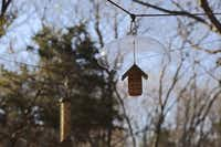 To join the count in Cedar Hill, or anywhere else where a National Audubon Society's count has been organized, please go to birds.audubon.org/christmas-bird-count. Participation is free.