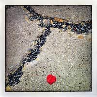 Sidewalk with red gum
