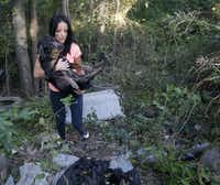 Marina Tarashevska carries a frail bait dog that was abandoned along Dowdy Ferry Road in southeast Dallas.( Michael Ainsworth  -  Staff Photographer )