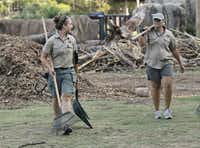 Elephant keepers Katrina Bilski and Angel Williams look for any debris and elephant droppings to shovel during the morning elephant enclosure cleaning at the Dallas Zoo Monday, August 5, 2013.