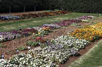 The arboretum maintains two densely planted trial gardens. Each bed of different plants is labeled so the home gardener can make notes about favorites for next fall, when it is time again to plant pansies, violas and other cool-season annuals.