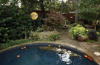 Backyard of Suzy and Rob Renz's home in Dallas on Friday, October 11, 2013. T