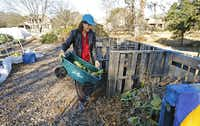 Carrie Dubberley of Plano dumps wilted iceberg lettuce damaged from recent freezing weather into the compost pile at the Community Unitarian Universalist Church community garden.