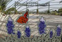 Butterflies and bluebonnets decorate the entry gate at the Rory Meyers Children's Adventure Gardens of the Dallas Arboretum and Botanical Garden.