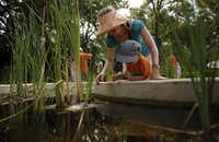 Pauline Schater and her son, Arthur Hagge, 3, look for tiny snails in one of the exhibits in the Wetlands area of the Dallas Arboretum's new Rory Meyers Children's Adventure Garden.