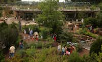 Visitors explore the paths of the Dallas Arboretum's new Rory Meyers Children's Adventure Garden during a preview this summer. The Adventure Garden formally opens Sept. 21 and is fully open to the public starting Sept. 23.