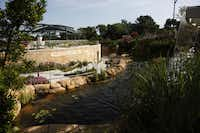 Plants and stones surround a curving water feature in the Dallas Arboretum's  Rory Meyers Children's Adventure Garden.