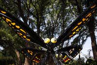 """Giant butterfly scupltures are part of the """"First Adventure"""" gallery in the Dallas Arboretum's new Rory Meyers Children's Adventure Garden."""