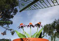 """A giant flowerpot is part of the """"Plants are Alive"""" gallery at the Dallas Arboretum's new Rory Meyers Children's Adventure Garden."""