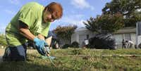 Glenna Brown dug up weeds in front of the Harmony House in Garland this month.  She is programs manager for Garland's  environmental waste services  department and staff liaison  for Keep Garland Beautiful.