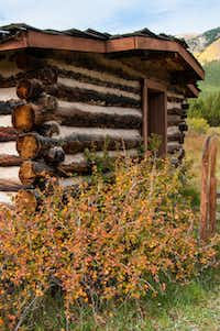 As this cabin in Winfield shows, autumn color in the Colorado Rockies comes from more than just golden aspen.