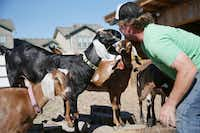 Daron Babcock takes a break from the construction of a pigpen at Bonton Farm-Works.( Andy Jacobsohn  -  Staff Photographer )