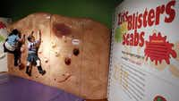 Maille Douglas, 8, left, and Lilia Ryerson, 8, climbs on the Skin Climbing Wall exhibit on Monday, February 20, 2012 at the Fort Worth Museum of Science and History. The Museum will open a new exhibit, Grossology: (Impolite) Science of the Human Body on Saturday, February 25, 2012. In the name of science and learning, visitors will discover the mysterious ways our biology keeps us healthy. (David Woo/The Dallas Morning News)