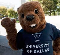 The groundhog is the unofficial mascot of the University of Dallas.( University of Dallas )