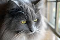 "Patti Haskins' cat, Jessie ""watching the birds.""(Patti Haskins)"