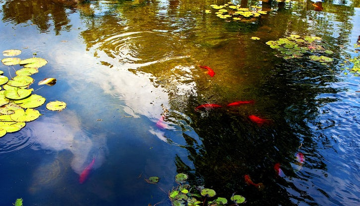 Capture dallas see some of our favorite fall photos for Koi pool singleton