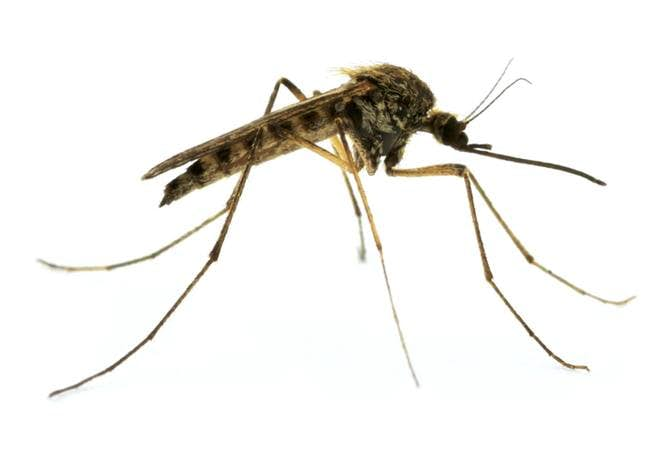 Environmentally Friendly Mosquito Control Available In