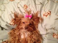 """My rescue dog Lola belle loves to pose,"" Lynn Kimmel says of her photo ""Lolla Belle.""(Lynn Kimmel)"
