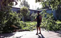 A man surveys storm damage Wednesday morning on Lahoma Street in Oak Lawn, near where a  man was found dead at the  Sycamore Tree Apartments after strong storms blew through Tuesday night.Jim Mahoney