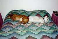 Maggie and her longtime buddy, Casper, lounging on the bed in 2002. Casper passed away in 2007.