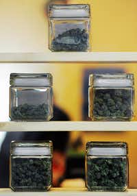 Jars with varieties of marijuana at the Northern Lights Cannabis Co. on Friday, Jan. 24, 2014, in Edgewater near Denver, CO. The store sells both medicinal and recreational marijuana. (Chris Schneider/Special Contributor)(Chris Schneider - Special Contributor)