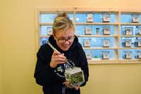 Bud tender Anna Holcomb weighs out a variety of marijuana for a customer at the Northern Lights Cannabis Co. on Friday, Jan. 24, 2014, in Edgewater near Denver, CO. The store sells both medicinal and recreational marijuana. (Chris Schneider/Special Contributor)(Chris Schneider - Special Contributor)