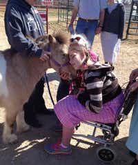 Miranda Nightingale of Oklahoma bonds with Sugar, a miniature therapy horse from Equest at Las Colinas Equestrian Center.( Deborah Fleck )