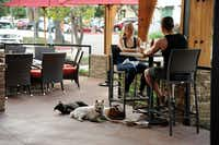 This dog-friendly patio is at the Lazy Dog Restaurant & Bar in Addison. (Alexandra Olivia/Special Contributor)