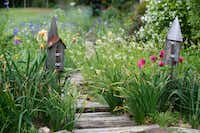 A small pathway leads through Mason's backyard garden in Red Oak. The garden was one of the tour stops for the America Iris Society's national convention in Dallas earlier this spring.Cooper  Neill - Staff photographer