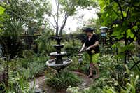 Christy Hodges fills the fountain in her traditional English garden on September 13, 2013 at her home in Coppell. The garden was inspired by a magazine subscription insert and includes native Texas plants.