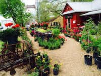 Dig This! in Hamilton, owned by a landscape architect, specializes in native plants and funky garden gifts.Dig This!