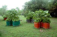 Keyholefarm.com in Bosque County, southwest of Dallas, makes keyhole gardening easier by supplying kits in a range of sizes and shapes.(Keyholefarm.com)