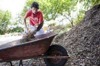 Mulch should be placed on top of the soil several inches thick.  Shredded tree trimmings are the top choice for many organic gardeners.