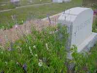 Horticulturist Greg Grant discovered the Duelberg salvias growing next to their headstone in Fayette County. He took cuttings, propagated both the blue- and white-flowered plants and tested them for several years to confirm both are Texas-tough selections.(Greg Grant)