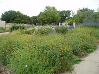 """Gailon Hardin's garden in Arlington is filled with native plants. She says they survive on rain and need additional watering about once a year. """"You ask me about anything, and my answer is going to be native plants,"""" Hardin says. """"You can just kick dirt on this other stuff.""""(Gailon Hardin)"""