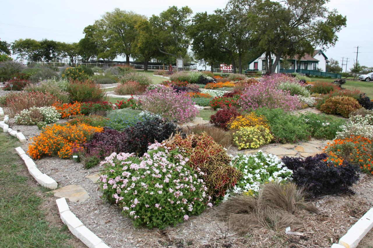 Master Gardeners Picks Are North Texas Hardy Gardening Dallas News