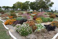 Master gardeners have been tending trial gardens sponsored by the Texas A&M AgriLife Extension Service in McKinney's Myers Park since 2010. They have kept data on which of the perennials performed best using little water and requiring minimal maintenance.(Texas A&M AgriLife Extension Service)