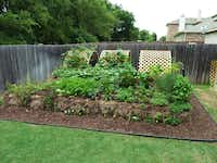 Stephen Larriva is a fan of straw bale gardening.( Stephen Lavirra )