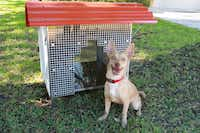 A high-tech Home of the Holiday Hounds is constructed of repurposed material and parts including diffuser grills for commercial lighting covered in Plexiglas. By Traver Construction, Dallas( SPCA of Texas  - SPCA of Texas)