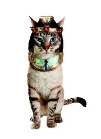 The beautiful and mysterious ruler is reincarnated as your cat. (But you knew that already.) Petco's glamour puss two-piece, one-size-fits-most costume is available in some stores and online. Store prices vary by location; petco.com price is $9.99.
