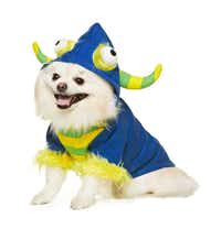 PetSmart carries the Martha Stewart collection that includes charming costumes such as googly-eyed Mr. Furry. Your dog is sure to steal the show in a bright blue hoodie with yellow furry trim. Available in sizes that range from extra-small to large, the price is $15.99 to $17.99, according to size. At stores and online.